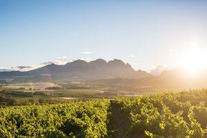 Trouwlocaties in de wijnvelden