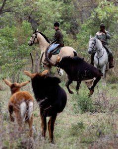 Te paard door de Afrikaanse bush is een hele bijzondere beleving