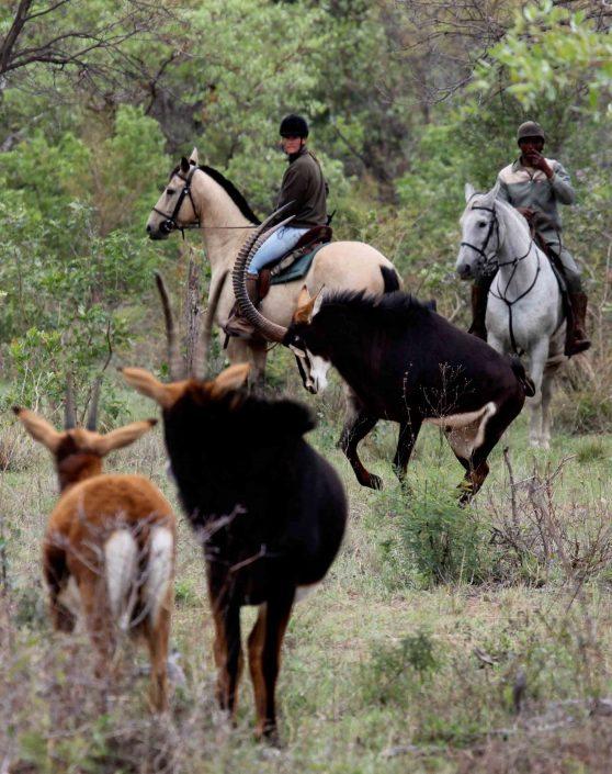 Foto's paarden bruiloft