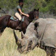 Trouwen in de Zuid-Afrikaanse bush: een droombruiloft te paard, waarom niet?