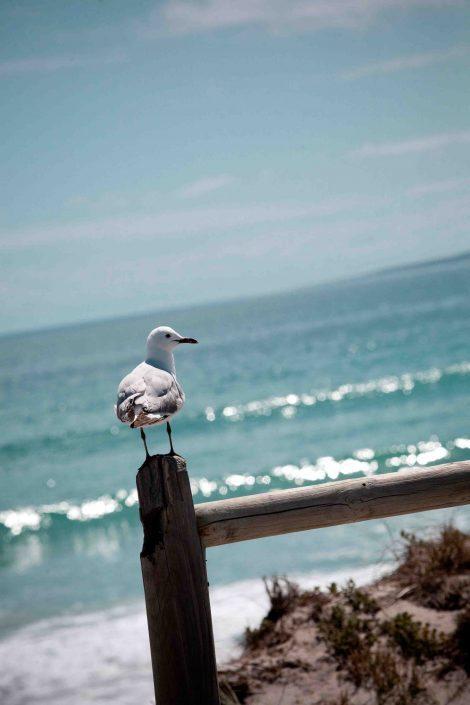 En ook een meeuw met op de achtergrond de oceaan bij Kaapstad