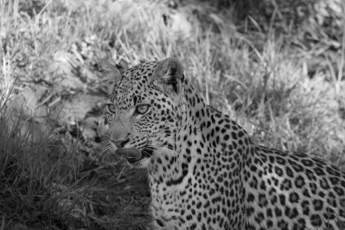 Intussen op safari.....