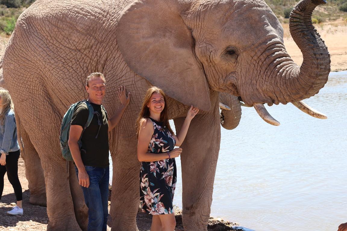 Drinken olifanten interactie