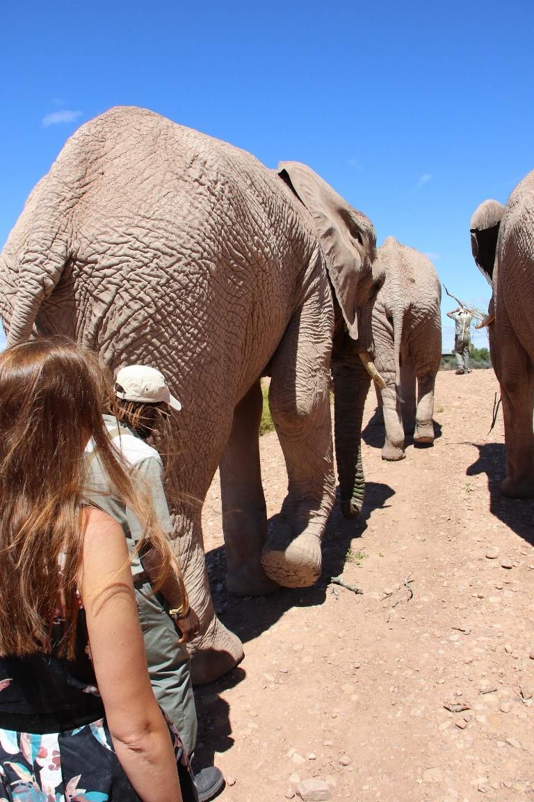 Bruiloft met olifanten